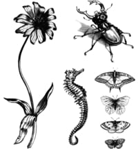 """Temporäre Tattoos """"Old Masters Collection: Natural Curiosities"""